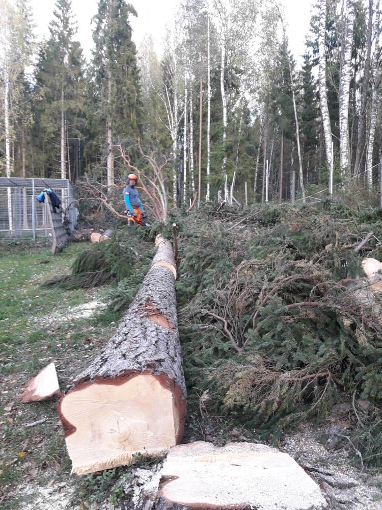 Muut palvelut; puunkaadon jälkeen